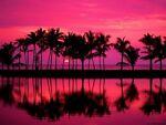 Pink Island Luxury