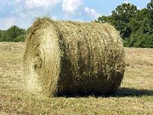 Hay for sale Large round Macclesfield Yarra Ranges Preview