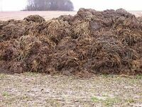 Free manure for your garden