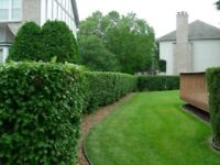 Quality Lawn Cutting, Sidewalk Edging, Hedge Trimming Services