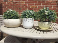 3 Plant Pots Planters House Plants Cream, White and Teacup Light Green