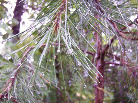 Pine Trail Treasures