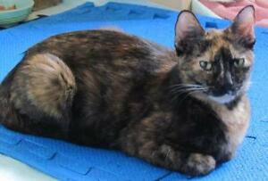 "Adult Female Cat - Tortoiseshell: ""Tikita"""