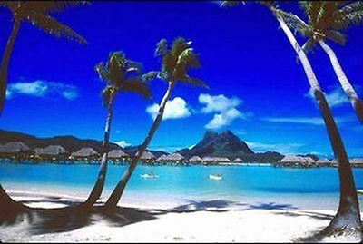 Bora Bora   Tropical Beach Poster 24X36 Ocean Photo Scenic Palm Trees 36252