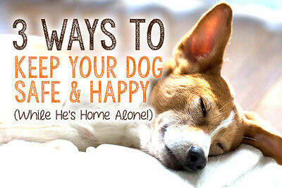 3 Ways To Keep Your Dog Safe Happy While He 39 S Home Alone