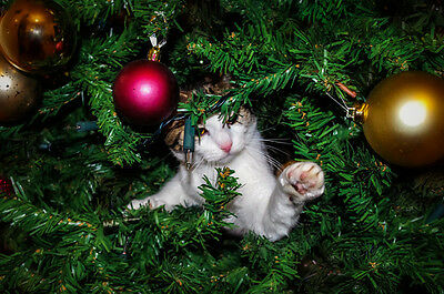How To Cat Proof Your Christmas Tree.How To Cat Proof Your Christmas Tree Huggable Muggs