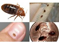 bed bug control extermination tyne and wear north east
