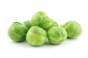 BRUSSELS-SPROUTS-Long-Island-150-seeds-vegetable-SEEDS-garden-winter-vegie