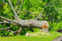 Tree Removal Service in London