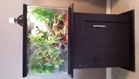 CRESTED GECKO,TANK,STAND,ACESSORIES, GOOD HOME ONLY!!!!