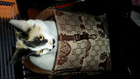 Gucci Small Dog Carrier