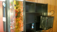 20 gallon Tank & stand with two newts, one shark & three catfish