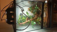 *REDUCED* Veiled Chameleon and enclosure