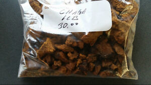 Chaga Mushroom Chunks or Sifted Powder