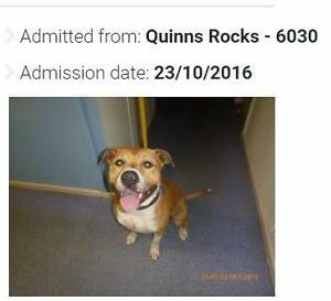 Found pets WANNEROO shire area Wanneroo Wanneroo Area Preview