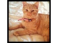 REHOMING MARMI THE GINGER FEMALE GIRL
