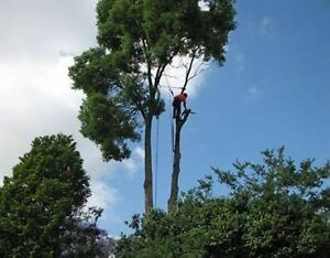Tree lopping services Sydney Merrylands Parramatta Area Preview