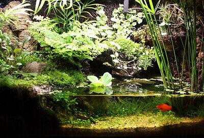 Musgo vivo verde natural moss plantas naturales paludario vivario ranitas peces