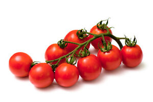 LARGE-CHERRY-TOMATO-SWEET-AND-BIG-100-ORGANIC-SEEDS