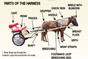 driving harness for a 10.5 hand pony