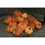 Handmade Primitive mini pumpkins, Halloween, Fall Decor ...set of 13....