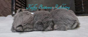 Fluffy Bottoms Rabbitry