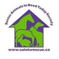 Vehicle Needed for Animal Welfare Organization