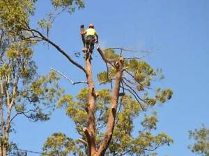 Tree Lopping Services Sydney Oatlands Parramatta Area Preview