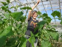 Horticulture and environmental volunteering in Iceland