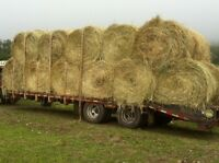 Need horse hay round bales