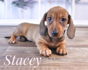 Adopt Dogs & Puppies Locally in Kitchener / Waterloo | Pets