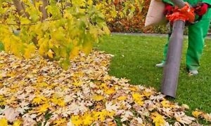 Leaf removal - Fall cleanup service Kitchener / Waterloo Kitchener Area image 4