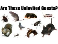 Professional Pest Control, without the pricetag!
