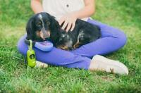 "Adult Male Dog - Dachshund: ""Bronte"""