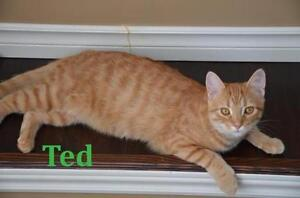 """Baby Male Cat - Domestic Short Hair: """"Ted - Loves other cats!"""""""