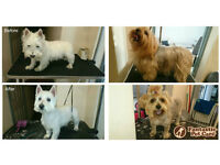 Dog Grooming and Day Care Service for your best friend in Balham, London