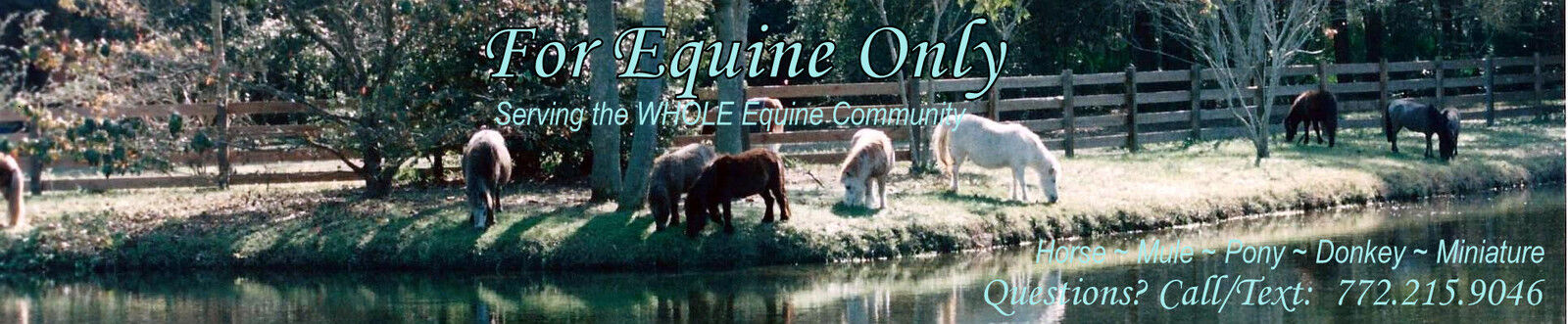 FOR EQUINE ONLY Tack for all horses