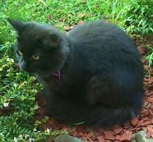 LOST CAT CAMERON PARK LAKE MACQUARIE Cameron Park Lake Macquarie Area Preview