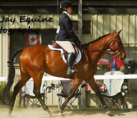 Seeking a Experienced Rider to Part-Board Horse