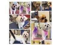 Dog grooming offer