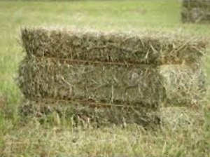 Wanted. Square hay or straw bales