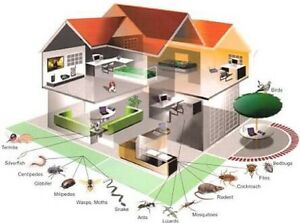 Professional pest control service Sydney wide. Campbelltown Campbelltown Area Preview