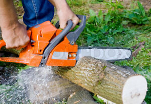 Tree Removal / Garbage Removal / Demolition / 646-0232