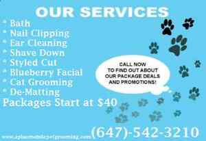 Mobile Cat Grooming Services at A+ Mobile Pet Grooming