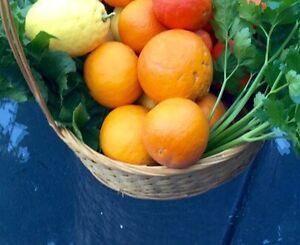 Fresh organic oranges, grapefruit and lemons.  No chemicals Cheltenham Kingston Area Preview