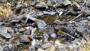 Eakin Creek (Three Mile) Placer Gold Claim for Sale $3500