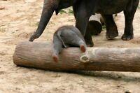 Elephants like to party too! PUB NIGHT