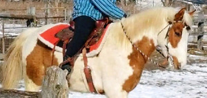 Looking for volunteer exercise rider, no beginners