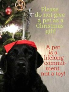 A home for Christmas  , cat's an dog's an uther pet's Edmonton Edmonton Area image 4