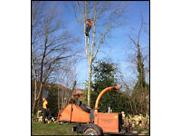 TGR Tree Care, Tree Removal, Pollarding Stump Grinding, Crown Raising / Reductions.